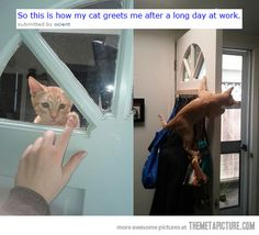 I wish my cat did this!