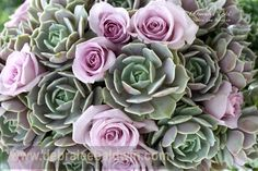 Echeverias and roses, from my book, Succulents Simplified
