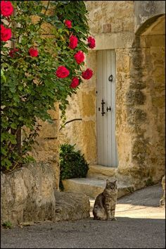 Cat in Provence, France
