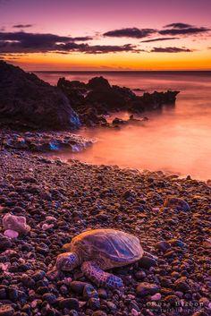 Honu Haven - Kohala Coast - Big Island - Hawaii - USA