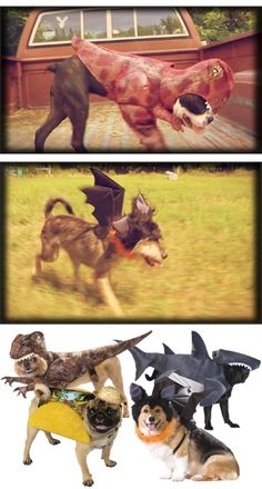 Small Dog Halloween Costume Ideas