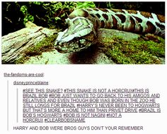 Jk Rowling even cleared this. This is not Nagini! Harry Potter Facts, Harry Potter Books, No Muggles, In The Zoo, Drarry, Mischief Managed, Superwholock, Fantastic Beasts, Hogwarts