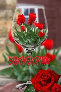 Cute Good Night, Cute Good Morning, Good Morning Wishes, Italian Memes, Dp For Whatsapp, Flowers For You, Morning Greeting, Anna, Pocahontas