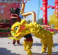 This shorter trad chinese dragon is something I am considering adapting to do a goanna. Would need a tail and different head shape. The front-facing thigh stand that this performance often pulls is perfect for doing the goanna's rear up posture.