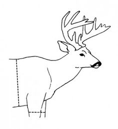 How to cape your deer for a shoulder mount