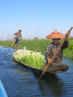 Inle Lake in Myanmar - People live and grow food on the lake. Here you can see a lot of newly harvested spring onions. In the back of the picture you can see the floating gardens.