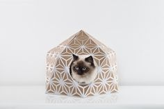 Image of Catcube White // cat cube