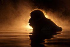 monkey-silhouette