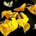 Psalmul 26 - Cel Mai Puternic | La Taifas Homemade Recipe, Mai, Plants, Planters, Plant, Planting