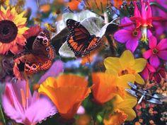 Estate come...  il volo silenzioso delle farfalle