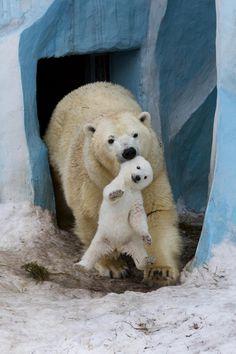 Polar bear Gerda playing with cub by Anton Belovodchenko