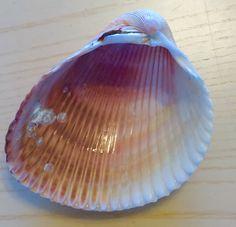 Shells, Home Decor, Seashells, Homemade Home Decor, Conchas De Mar, Sea Shells, Decoration Home, Interior Decorating