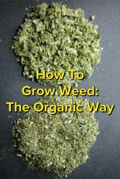 How To Grow Weed: The Organic Way                              …