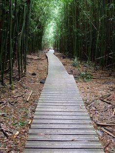 Anyone ever hike through the bamboo forest in the Kipahulu area of Haleakala Nat'l Park (#Maui)? #Hawaii #travel