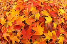 fall leaves on the ground - Google Search