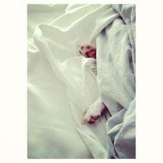 puppy paws Photo by @happymundane • Instagram
