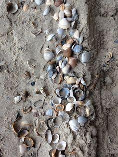 Op het strand gevonden
