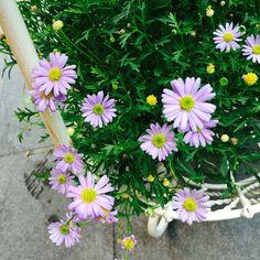 Special purple color  #flower#purple#yellow