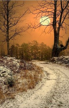 Beautiful Moon, Beautiful World, Beautiful Places, Winter Szenen, Winter Trees, Winter Holiday, Holiday Ideas, Winter Images, Winter Pictures