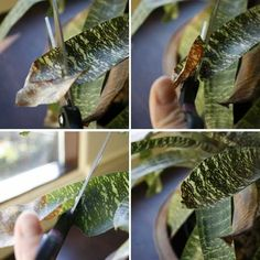 How To: Trim Your Bromeliads (and Enjoy It!)
