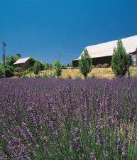 Casa in campagna circondata da alberi e fiori, Daylesford & macedon, Victoria | Australia