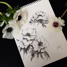 anemone sketch by clang Art Floral, Floral Drawing, Cute Tattoos, Flower Tattoos, Tatoos, Hip Tattoos, Anemone Flower, Flower Art, Cover Up Tattoos