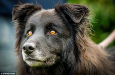 The black collie cross first went to a rescue centre in Italy as a six-month old puppy, bu...