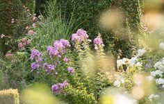 Bei meiner Recherche nach schönen Gartenmotiven für meine Kalender, bin ich im letzten Jahr, im August, bei Thomas im Sauerland gewesen. Wir...