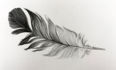 Drawing of a feather