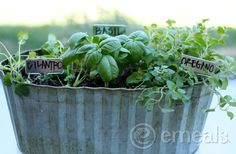 Simple Herb Garden from The Emeals Blog