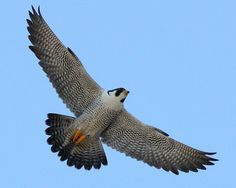 Different Types of Flacons