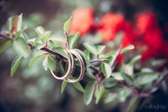 #wedding #ring Wedding Ring, Rings, Plants, Estate Engagement Ring, Wedding Rings, Ring, Jewelry Rings, Plant, Wedding Band