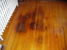 How To Get Rid Of Dog Pee Smell On A Wood Floor C L E A