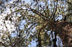 Aula 5 - Jardim Botânico - (Nikon D5000) (Espiral de Fibonacci?)