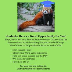 Here's a Great Opportunity for You! Surviving In The Wild, Marketing Program, Wildlife Photography, Fundraising, Photo S, Charity, Opportunity, Have Fun, Students