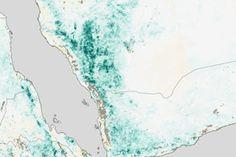 Arabian Peninsula Primed for Rift Valley Fever