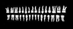 Si quieres conocer más cosas del mundo de la odontología visita nuestro blog. Noticias, Historia, Curiosidades, Consejos, Tratamientos...