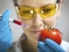 5 daños a la salud por alimentos transgénicos