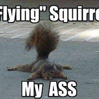 Funny Animal Photos, Funny Animal Memes, Funny Photos, Funny Animals, Cute Animals, Animal Humor, Flying Squirrel, Cute Squirrel, Squirrels