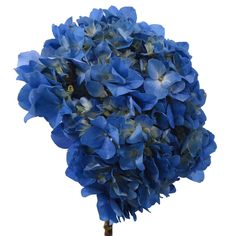 Elite Hydrangeas - Blue - 15 Stems - Sam's Club
