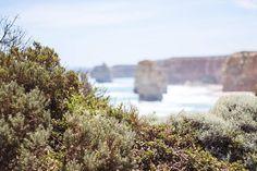 #adventure #australia #adventurethatislife #beautiful #breathtaking #canon #exploretocreate #love #landscape #liveauthentic #letsgosomewhere #lensdistortions #melbourne #outdoor #paradise #packandgo #peace #roadtrip #saarland #sunset #travel #view #vsco #green #coast #rocks #sea #12apostles #summer #nature by open_land_photography http://ift.tt/1ijk11S