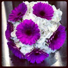 White Hydrangea. Purple Gerbera Daisies. Love this, just not so organized. And add teal gerberas for bridesmaids