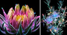 I Photographed The Invisible Light That Plants Emit   Bored Panda