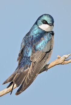 Beautiful Creatures, Animals Beautiful, Cute Animals, Most Beautiful Birds, Pretty Birds, Rare Birds, Exotic Birds, Tropical Birds, Colorful Birds