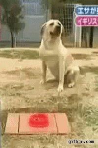 Dog prank