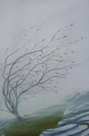 windswept tree - Google Search