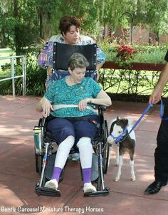 Baby Scout learning to walk next to a wheel chair. Gentle Carousel Miniature Therapy Horses