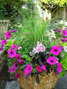 Beautiful Mixed Planter, Petúnia, Fountain grass