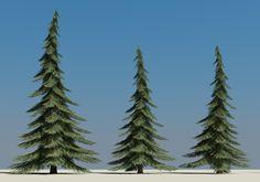 coniferous trees - Google Search