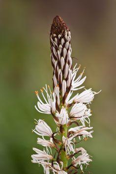 ❕ Brown and White Flower - new photo at Avopix.com    🆗 https://avopix.com/photo/47469-brown-and-white-flower    #flower #plant #leaf #garden #spring #avopix #free #photos #public #domain